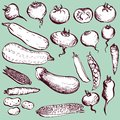 Set of drawing vegetables Royalty Free Stock Image