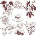 Set of drawings grapes