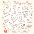 Set drawings of poultry and egg for design menus, recipes. Poultry meat chicken, turkey, goose, duck, quail, pheasant. Royalty Free Stock Photo