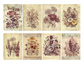 Set of eight shabby vintage floral cards with textured layers and text or tags Stock Photos