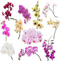 Set of eleven orchid floral branches isolated on white