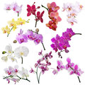 Set of eleven orchid flowers branches isolated on white