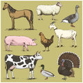 Set of engraved vintage domestic, farm animals include horse and sheep, cow . chicken. goat . turkey. pig. duck with Royalty Free Stock Photo