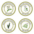 Set of essential oil labels: clove; anise; rosemary; jasmine.