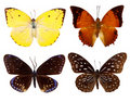 Set of exotic butterfly Royalty Free Stock Photo