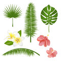 Set of exotic tropical flowers, plants, leaves. Vector illustration with realistic palm, leaf, hibiscus, plumeria.