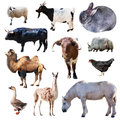 Set of farm animals. Isolated on white Royalty Free Stock Image
