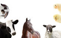 Set of farm animals Royalty Free Stock Photo