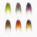 Set of feathers isolated vector on background Royalty Free Stock Photos