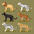 Set felines vector illustration collection of isolated predator on a green background Royalty Free Stock Photo