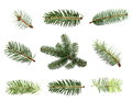 Set fir tree branch isolated on white Royalty Free Stock Photo