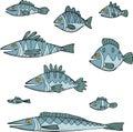 Set the fish Royalty Free Stock Photo