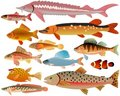 Set of fishes Royalty Free Stock Images