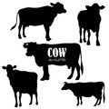 Set of five cow silhouettes Royalty Free Stock Photo