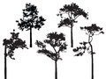 Set of five pine tree silhouette vector Royalty Free Stock Photo