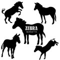 Set of five zebra silhouettes Royalty Free Stock Photo