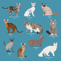 Set of flat sitting or walking cute cartoon cats