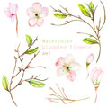 A set with the floral decorative elements in the form of the watercolor blooming flowers, leaves and branches with the buds for a Royalty Free Stock Photo