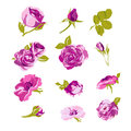 Set of floral design elements, flower collection Royalty Free Stock Photo