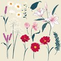 Set of  Floral Greeting Card with Blooming  garden flowers. Royalty Free Stock Photo