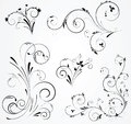 Set of floral swirl designs black design with elements on gray background Royalty Free Stock Images
