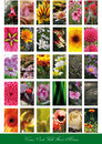 Set of flowers backgrounds Royalty Free Stock Photo