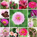 Set of flowers different pink in garden Stock Images