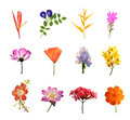 Set of flowers isolated Royalty Free Stock Photo