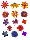 Set of Flowers painted in watercolor Royalty Free Stock Images