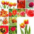 Set of flowers red different Royalty Free Stock Photography