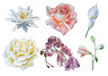 Set with flowers. Rose. Lily. Calla. Orchid. Watercolor illustration.
