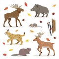 Set of forest wild animals isolated on white background