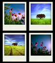 Set Of Four Instant Nature And...