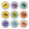 Set of four perfect equine badges made in detailes Stock Photography