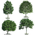 Set of four trees isolated against pure white Royalty Free Stock Photography