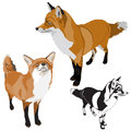 Set of foxes Stock Photography