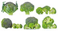 Set of fresh broccoli isolated on white background Royalty Free Stock Photo