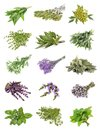 Set of fresh herbs   on an isolated Royalty Free Stock Photo