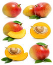 Set of fresh mango fruits isolated on white Royalty Free Stock Photo