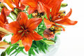 Set fresh orange lilly summer flowers Stock Image