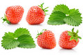 Set fresh red strawberry with green leaves Royalty Free Stock Photo