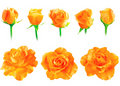 Set of fresh roses isolated Royalty Free Stock Photography