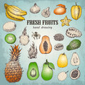 Set of fresh tropical fruits in sketch style