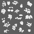 Set fruits and berries graphics vector illustration black white fruit on gray background Royalty Free Stock Photo