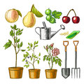 Set of gardening items. Royalty Free Stock Photo