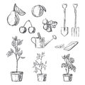 Set of gardening items Royalty Free Stock Photo