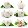 Set of garlic fruits with green parsley leaves Royalty Free Stock Photography