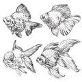 Set of Goldfish. Vector illustration Royalty Free Stock Photo