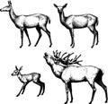 Set of graphic deers