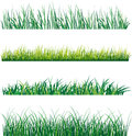Set grass white background vector illustration Royalty Free Stock Images